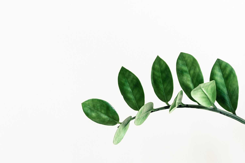 能帮助你睡眠的5种天然草药